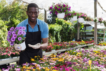 African American florist working in sunny greenhouse