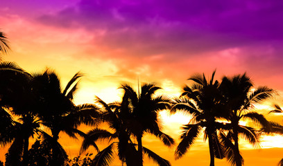 coconut tree and beautiful sunset.