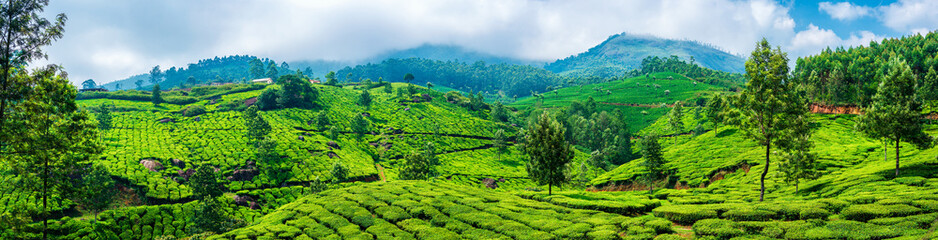 Panoramic beautiful tea plantations in hills near Munnar, Kerala, India. Fotomurales