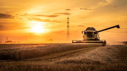Mähdrescher erntet auf Feld im Sonnenuntergang