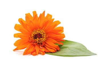 Beautiful orange flower.