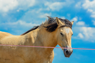 portrait of a horse against the sky and clouds
