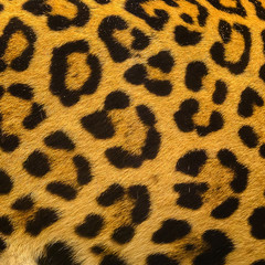 Close up leopard spot pattern texture background