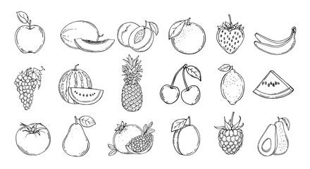 Set of fruits. Vector illustration. Hand drawn
