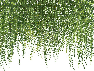 climbing wall of ivy. vector illustration on white background. banner and web background.