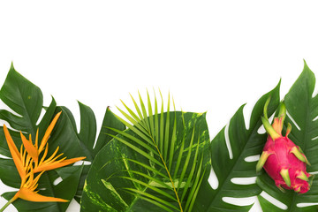 Still life photo tropical concept with border of monstera vine leaf with Heliconia flower and dragon fruit top view flat layout mockup