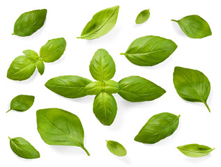 Fresh basil leaves, isolated on white background. Top view or high angle shot of various basil leaves, design elements.