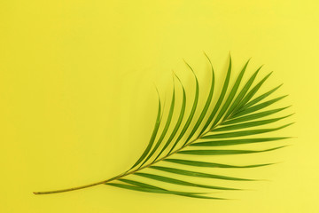 Still life colour photo palm leaf on yellow background top view flat layout