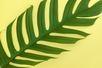 Still life colour photo palm monstera leaf on yellow background top view flat layout