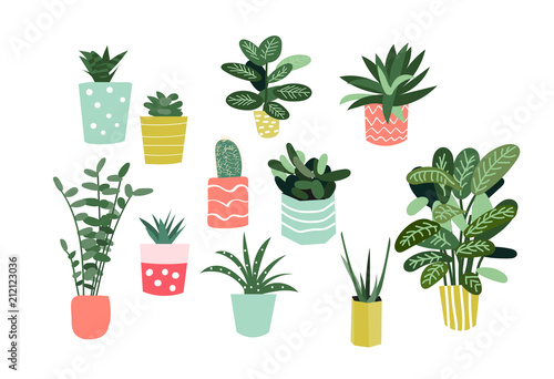 potted plants collection  succulents and house plants  hand