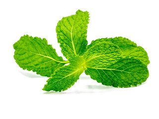 Fresh raw mint leaves isolated on white background with clipping path