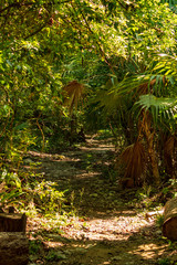 trekking path in the rainforest. smells are more intense and sounds are difficult to pinpoint.