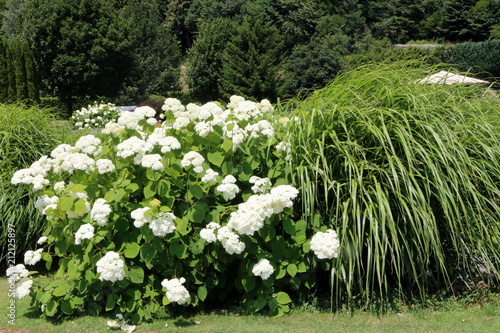 """""""Summer Garden, Modern Garden Green-white, Sommergarten"""