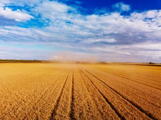 Wall Mural - Golden wheat field