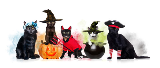 A group of black cats wearing halloween outfits
