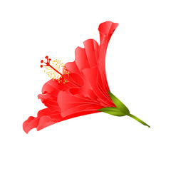 Red flower tropical plant hibiscus   on a white background  vintage vector illustration editable hand draw