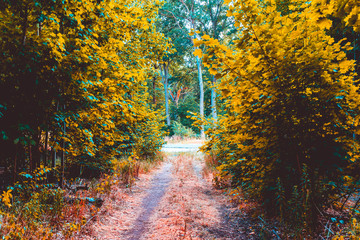 footpath to an road in a forest