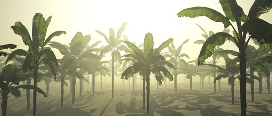palms in the morning. Sunrise over a palm grove. Palms in the fog. 3D rendering