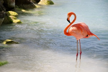 Canvas Prints Flamingo 1 flamingo dozing