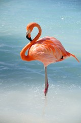 Photo sur Plexiglas Flamingo like a flamingo