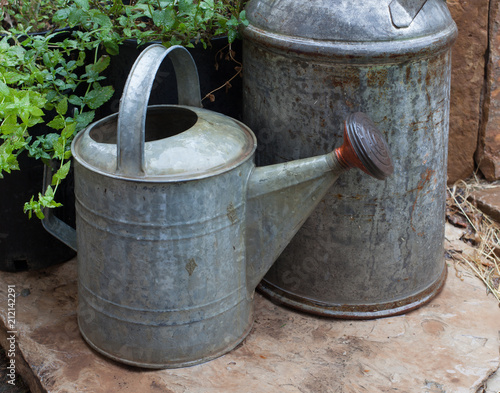 A Galvanized Aluminum Watering Can Next To Milk With Mint Plants Growing Nearby