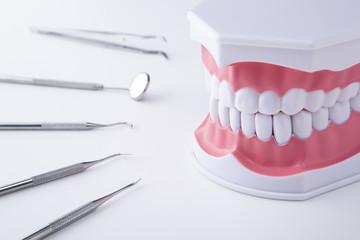 歯科用器具と歯の模型