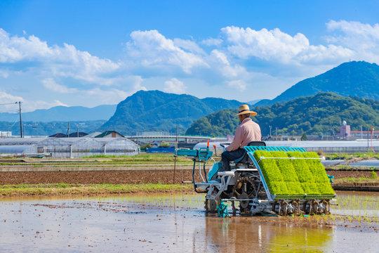 静岡県伊豆の国市 初夏の田植え風景