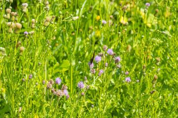 Butterfly on a flower in sunlight in summer