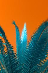 Minimal blu palms on orange background