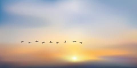 coucher de soleil - soleil couchant - lever de soleil - vol de canard - fond - ciel - soleil - beauté
