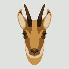 goat chamois face head vector illustration flat style front side