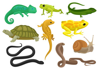 Reptile and amphibian set, chameleon, frog, turtle, lizard,gecko, triton vector Illustration on a white background Wall mural