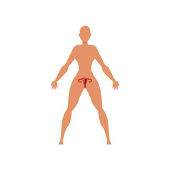 Female biological sexual system, anatomy of human body vector Illustration on a white background