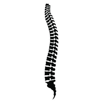 Human spine sign. Black icon spine isolated on white background. Human spinal column symbol. Stock vector illustration.