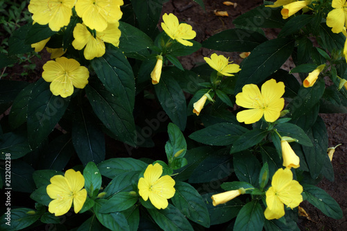 Salad shrubs with yellow flowers like sunlight at the beginning of salad shrubs with yellow flowers like sunlight at the beginning of summer brought joy and beauty mightylinksfo