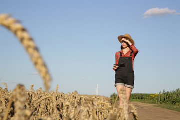 Young farmer or agronomist woman examine the wheat field before harvesting