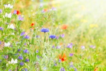 Sommer, Wildblumen, Wiese