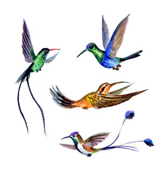Set of hummingbirds, watercolor drawing on white background isolated with clipping path.