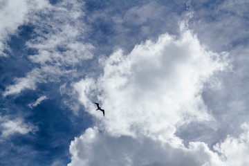 The bird is flying in the cloudy sky