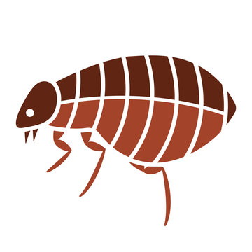 Flea bug icon