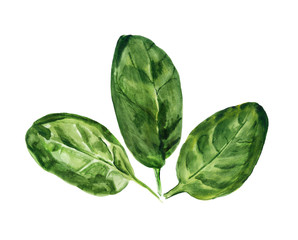 watercolor leaves of spinach