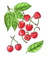 bright cherries with green leaves isolatedon white background hand-drawn illustration