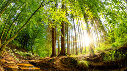 Beautiful forest in summer with bright sun shining through the trees