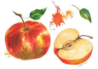 Watercolor red apple and apple cut on an isolated background with green leaves and elements