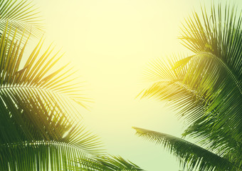 coconut palm tree in vintage style
