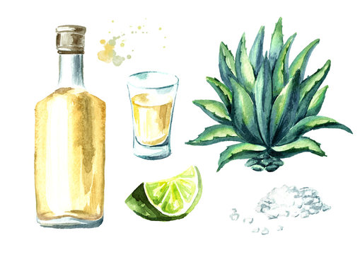 Alcohol drink Tequila set, yellow bottle of mexican cactus booze, full shot glass with slice of lime and salt, agave plant. Hand drawn watercolor  illustration, isolated on white background