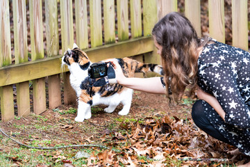 Curious calico cat walking, woman, female owner sitting, squatting on knees together, taking photo, picture, photographing, exploring house backyard garden