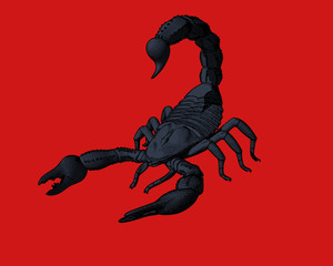 Engraving drawing scorpion illustration