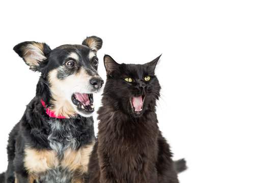 Funny Dog and Cat With Shocked Expressions