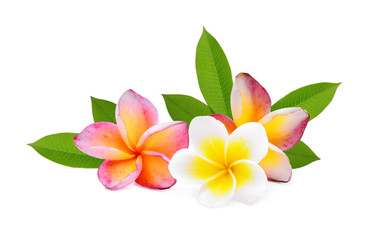 frangipani tropical flower, plumeria, Lanthom, Leelawadee flower with green leaves isolated white background